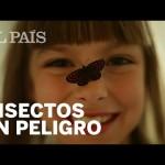 Los insectos de tu infancia están desapareciendo