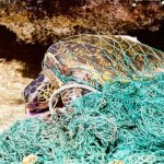 """Un millón de toneladas de """"redes fantasma"""" acaban cada año en océanos"""