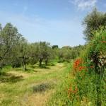 La adaptación al Cambio Climático como oportunidad para el ecoturismo