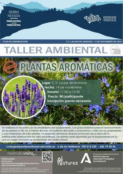 plantas aromaticas taller