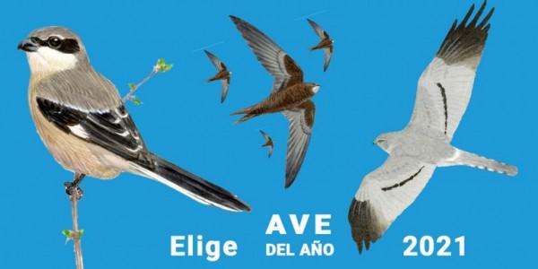ave del año seo bird life