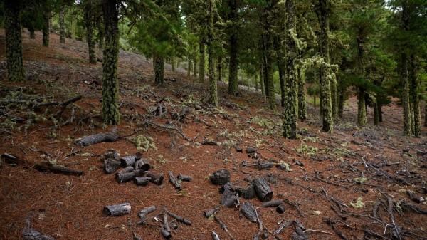 deforestación miteco