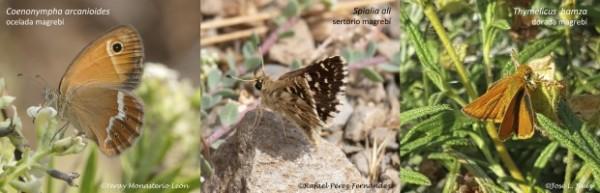 mariposas ceuta