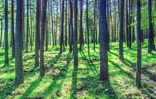 biodiversidad bosques