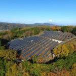 Nace Aliente: una alianza estatal en defensa de la biodiversidad frente a las renovables a gran escala