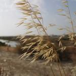 La restauración de humedales pasa por evitar la degradación y un cambio profundo
