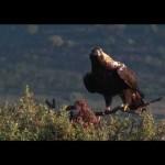 El turismo ornitológico en España