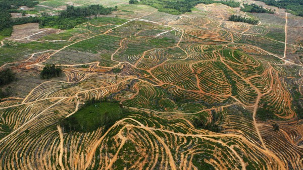 aceite palm aplantaciones