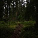 Los bosques europeos son cada vez más vulnerables a los vientos, incendios y plagas de insectos