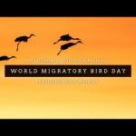 """Día Mundial de las Aves Migratorias: """"¡Canta, vuela y elévate como las aves!"""""""