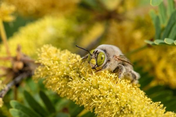 70-especies-de-abejas
