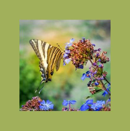 Taller de Mariposas en el Jardín Botánico de Madrid