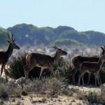 El 66% de las especies en España, en estado desfavorable, según WWF