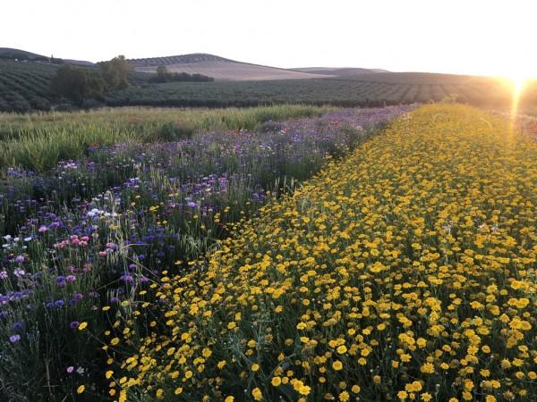 global nature flores