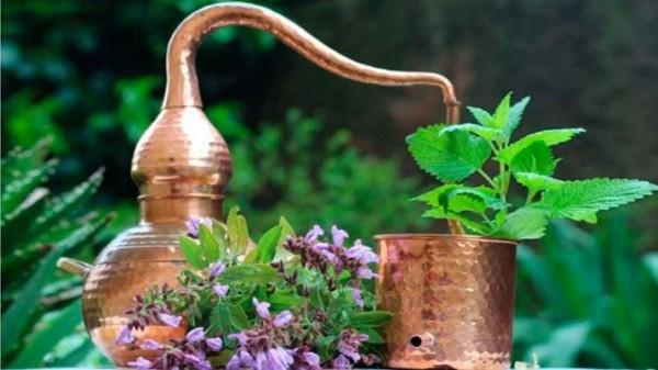 taller-de-destilacion-y-aromaticas