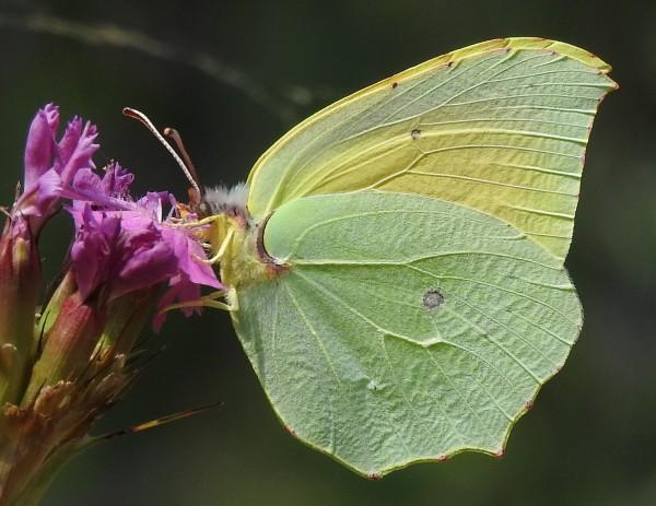 mariposas valencia