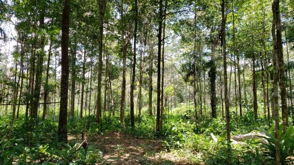 amazonia co2