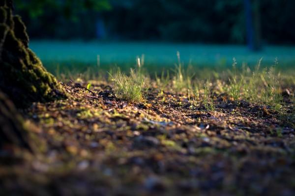 suelos degradados