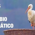 ¿Cómo afecta el cambio climático a las aves migratorias?