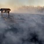 Biodiversidad y crisis climática en el centro de reuniones internacionales