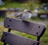 Fuente: SEO Bird Life