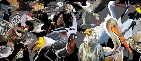 día aves migratorias