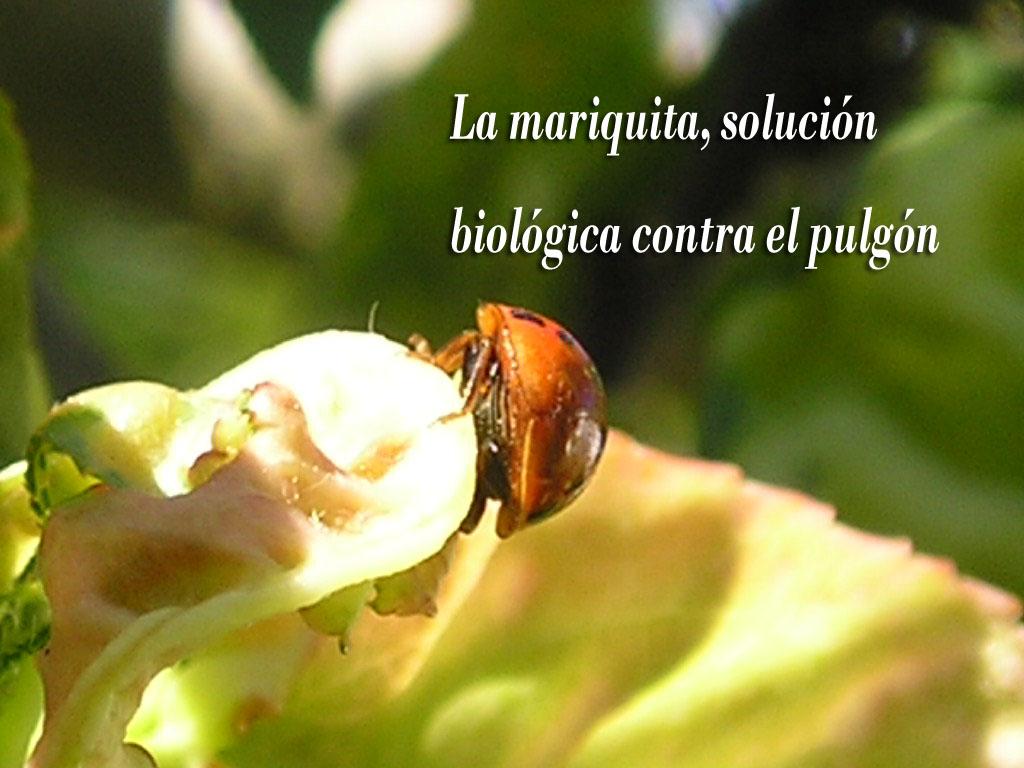 Resultado de imagen para CONTROL BIOLOGICO